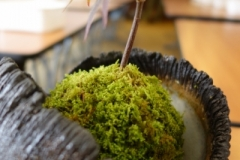 Superbe céramique d'Arnaud Roy avec son kokedama